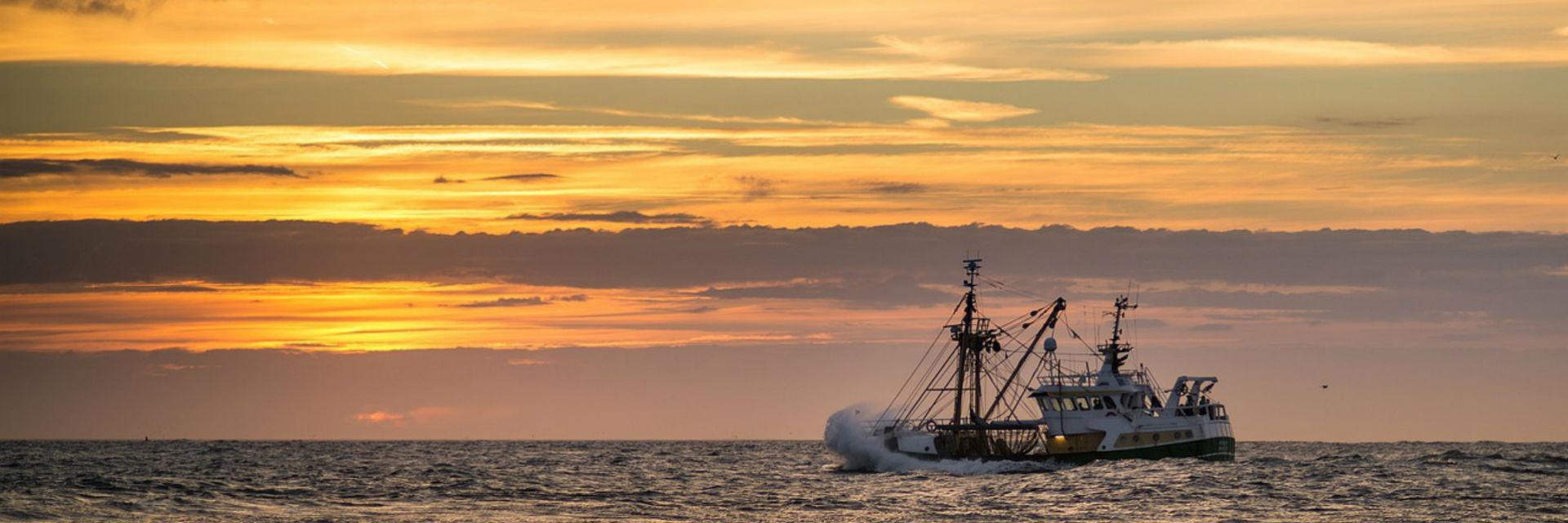 Barco pesca bonito