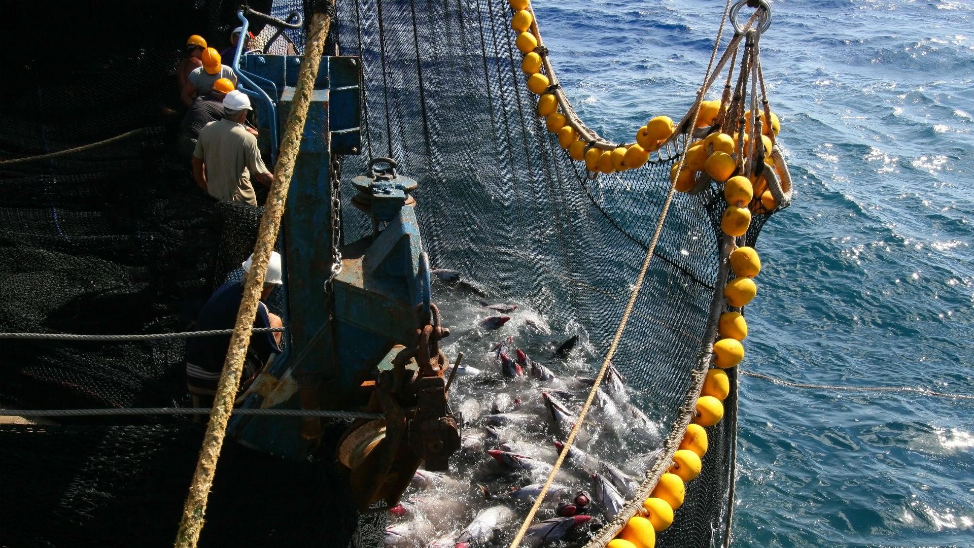 Pesca Atún - Sostenibilidad Isabel